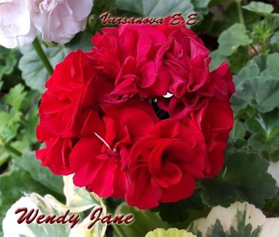 Wendy Jane
