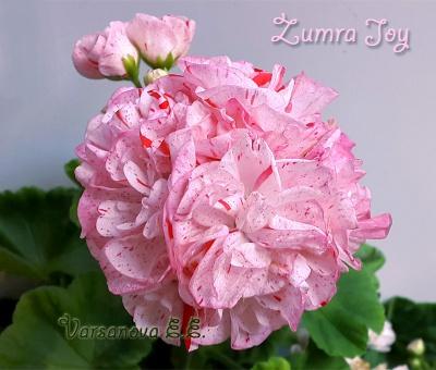 Zumra Joy