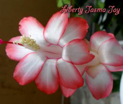 Liberty Jasma Jay