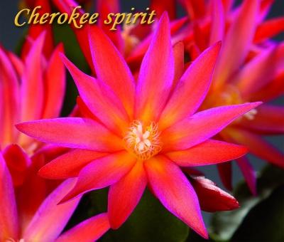 Cherokee Spirit