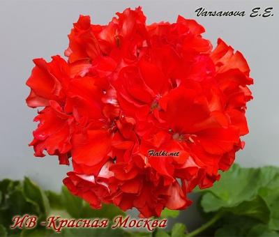 ИВ-Красная Москва