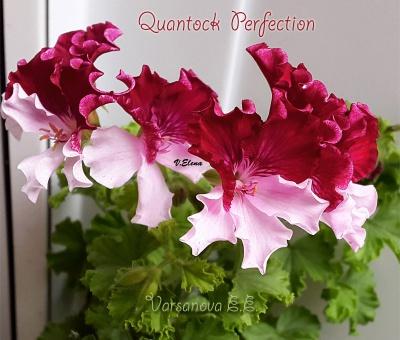 Quantock perfection