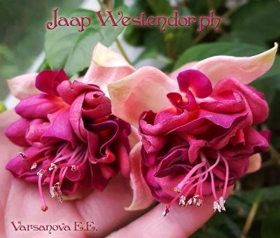 Jaap Westendorph