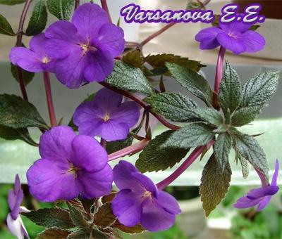 Pendent Purple