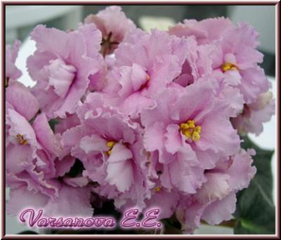 ЕК-Шелковы Розы