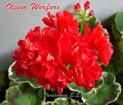 Oliver Werfare