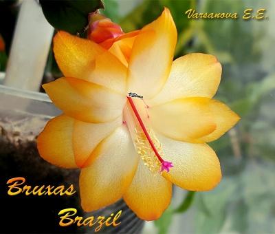Bruxas Brazil