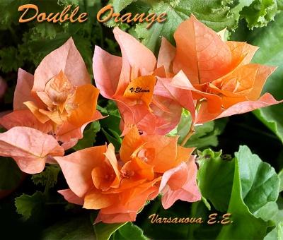 Double Orange