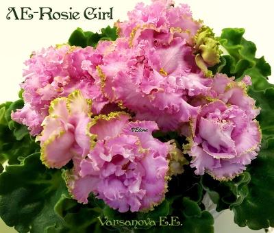 ЛЕ-Rosie Girl