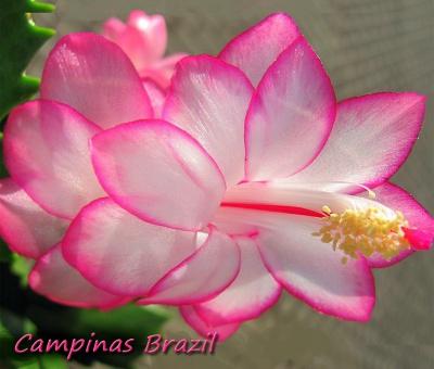 Campinas Brazil