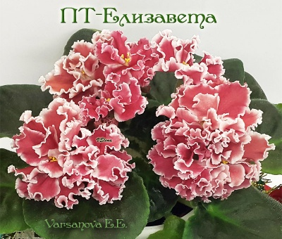 ПТ- Елизавета