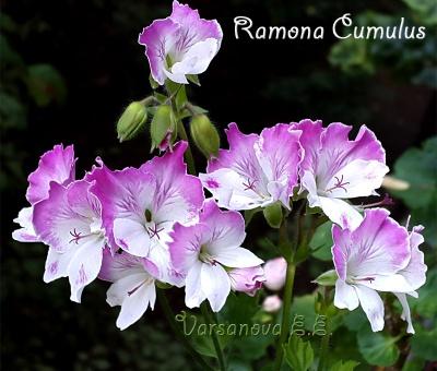 Ramona Cumulus