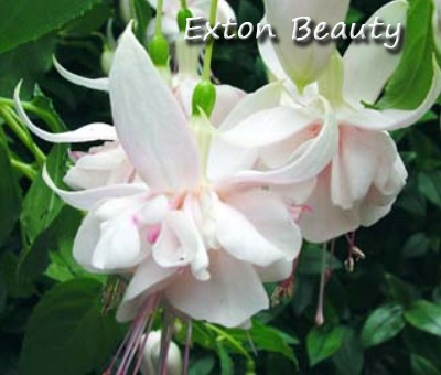 Exton Beauty