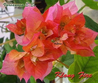 Klong Fire
