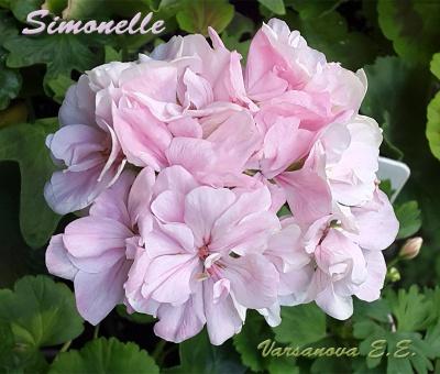 Simonelle