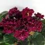 ЛЕ-Огненный Цветок