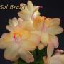 Sol Brazil