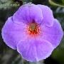 Arletta Blue