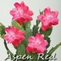 Aspen Red