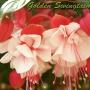 Golden Swingtaim