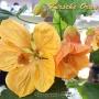 Kirsche Orange