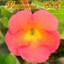 Peach Cascade